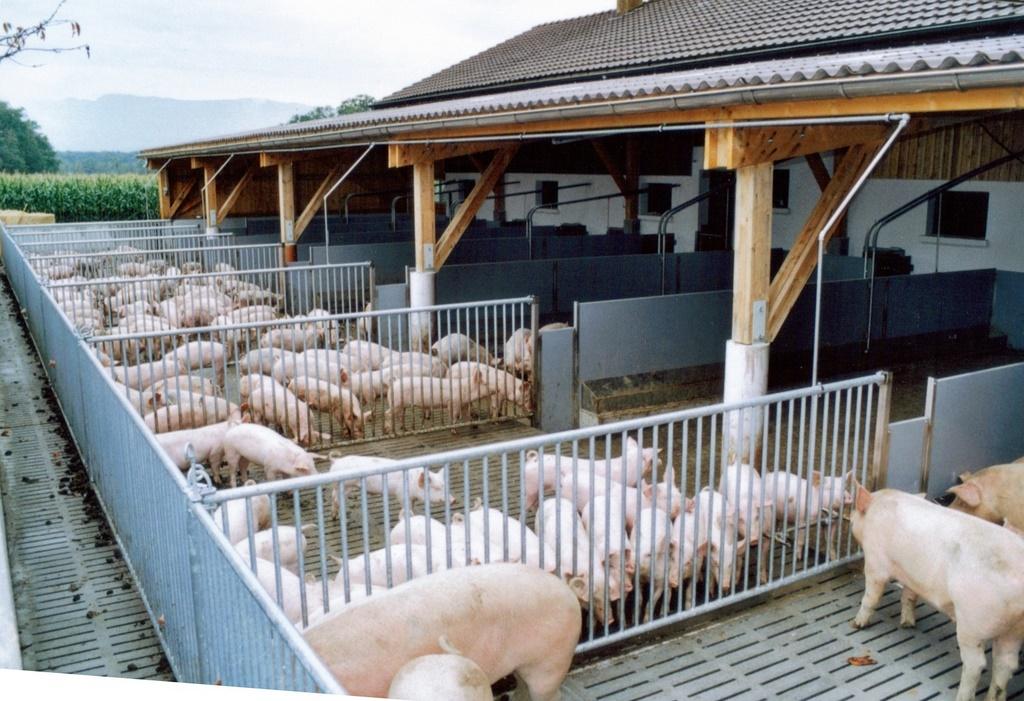 schweinestall bauen stroh